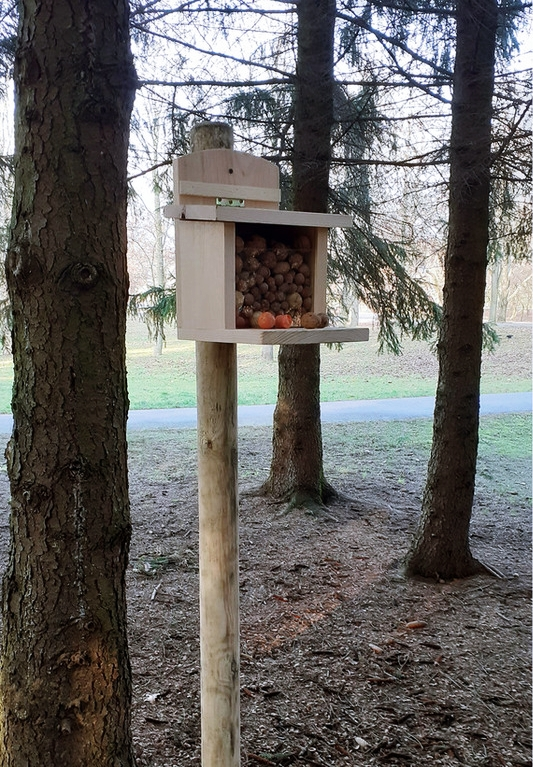 Karmnik dla wiewiórek