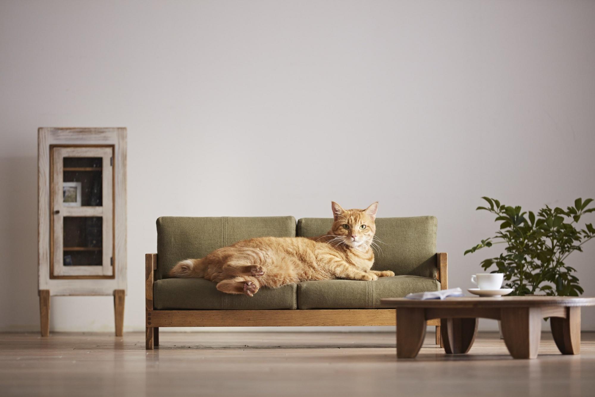 meble dla kotów