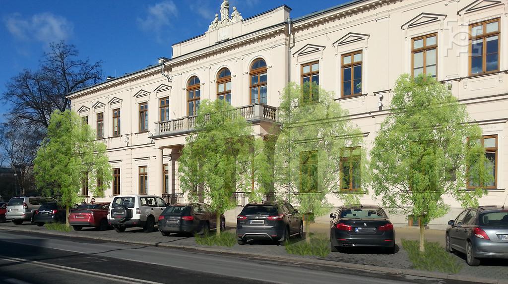 drzewa krakowskie przedmieście