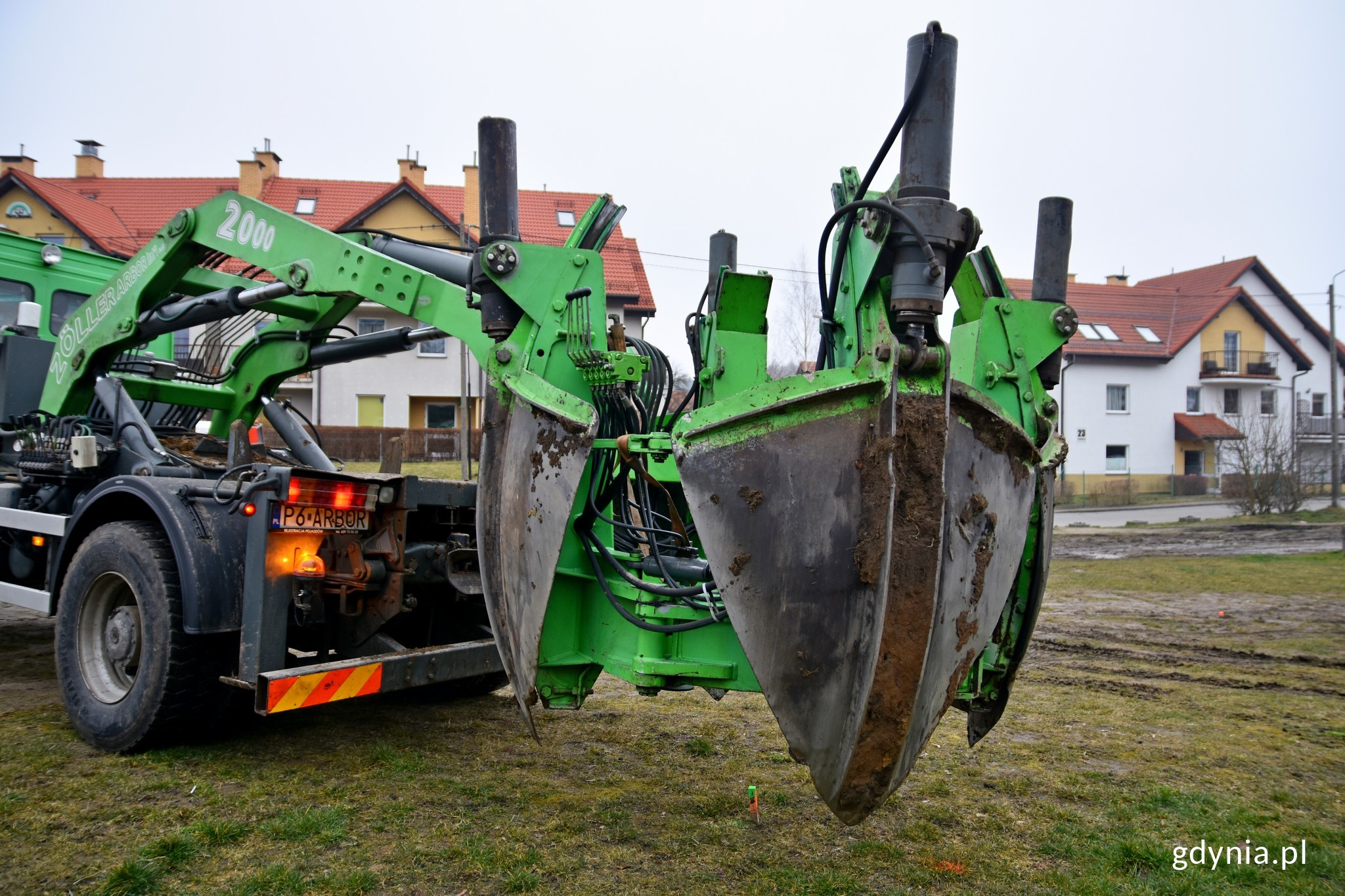 Gdynia: zamiast wyciąć drzewa