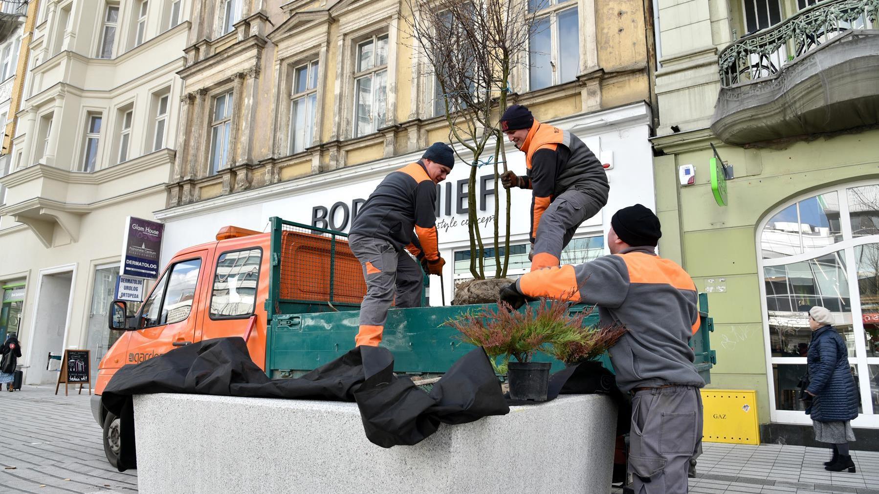 Nowe drzewa na ulicy Św. Marcin