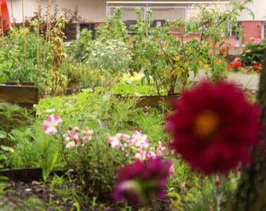 ogród społeczny w Gdyni