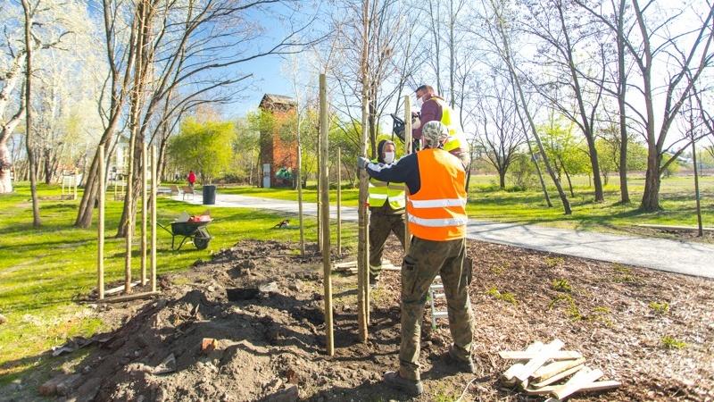 sadzenia drzew