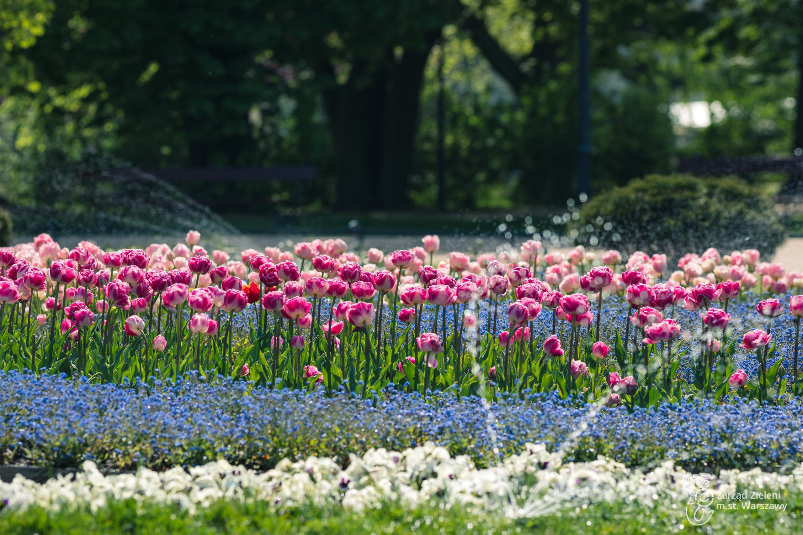 Ogród Krasińskich w Warszawie