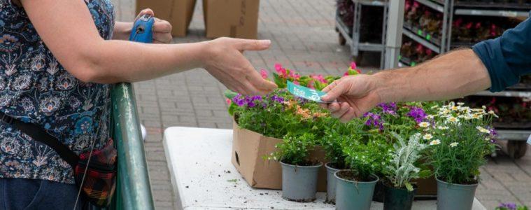 śmieci rośliny