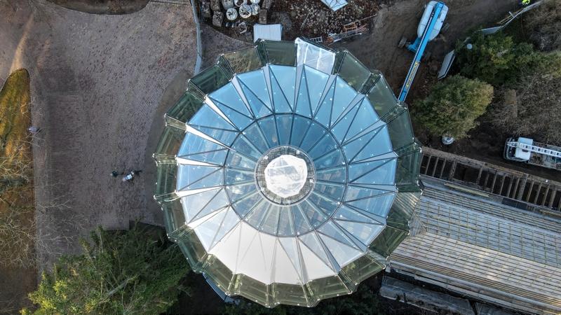 180-letni daktylowiec z Gdańska umiera