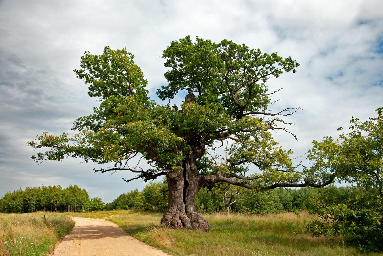najpiękniejsze drzewa
