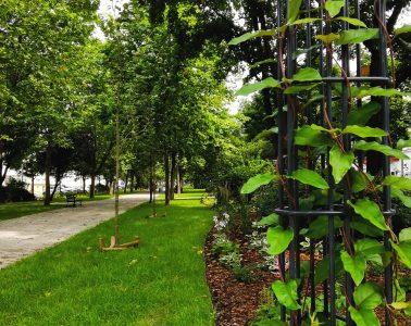 miejskie planty